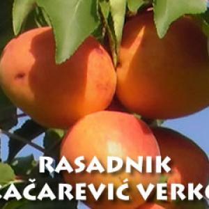 Rasadnik Kačarević Verko