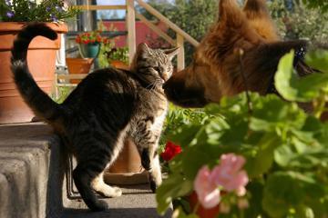 Kućni ljubimci