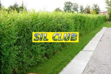 Sil Club Senta doo Čudesna živa ograda logo