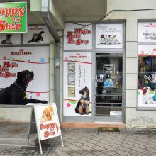 Majin Puppy Pet Shop